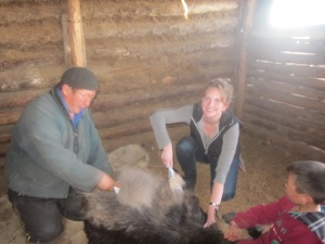 Trying my hand at combing a cashmere goat